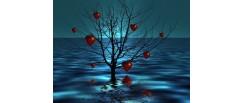Приказка за Човешкото Сърце и Океана